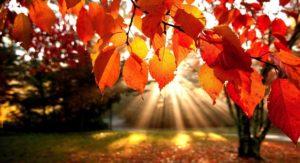 Nettoyage d'automne