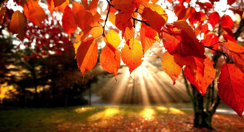 L'automne ne veut pas dire laisser tomber son jardin