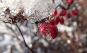 Préparer son jardin en hiver